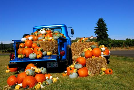 King_estate_pumpkin_harvest_by_d70fo