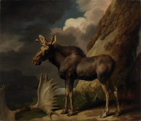 Stubbs_moose_600