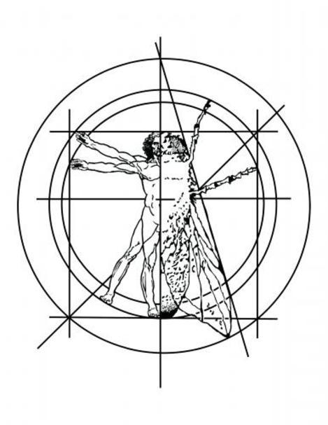 Lrg698the_fly_logo